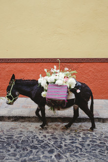 Destination Mexico wedding