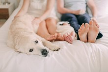 classic newborn photos with dog