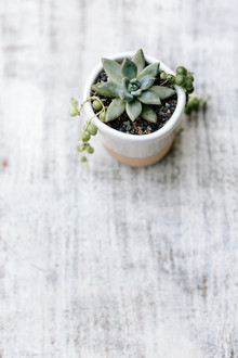 tiny succulent planter