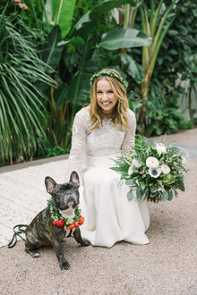French bulldog ring bearer