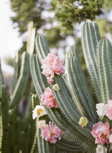 Peonies and cactus in a spring wedding