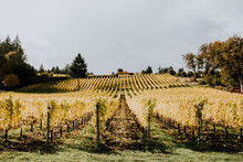 Wedding at Methven Family Vineyards