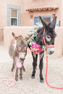 Wedding donkey's