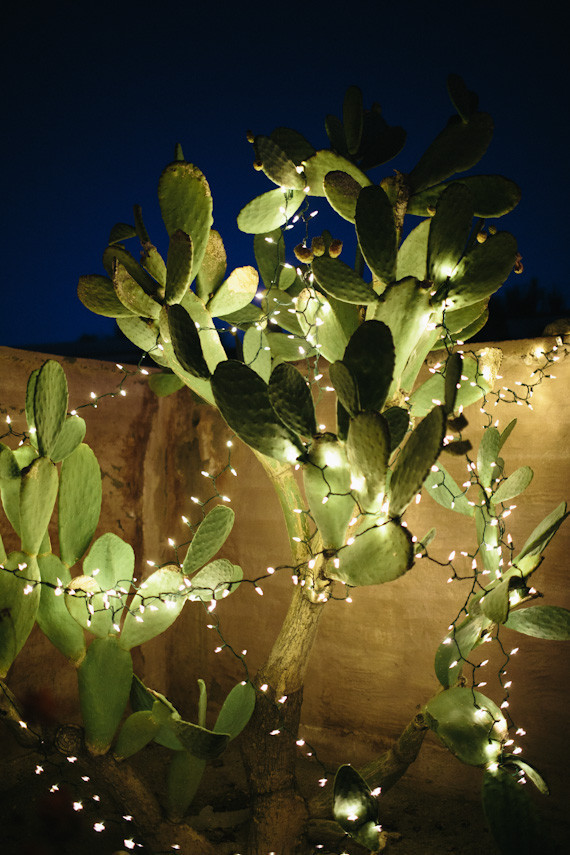 Cactus with lighting