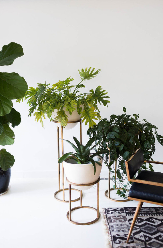 plant stands and house plants