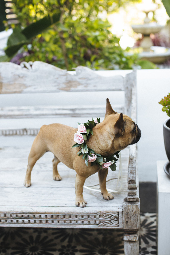 frenchie with flower crown