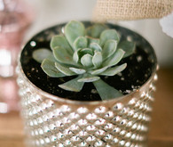 Potted succulent decoration