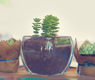 Lake-front wedding succulent table centerpieces