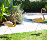 Gold Flamingoes