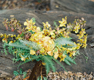 Rustic Fall yellow bouquet