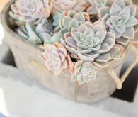 Wedding succulents