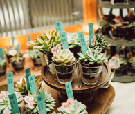 Mini succulent escort cards