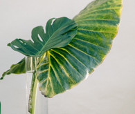 Palm leaf decor