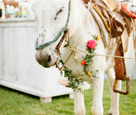 Wedding burro
