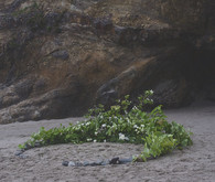 Oregon beach wedding ceremony