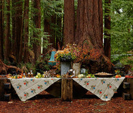 Rustic fall party in the redwoods