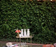 Eclectic outdoor dinner party