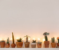 Desert holiday mantel