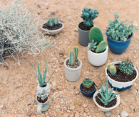 Potted cactus decor