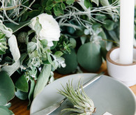 Air plant place cards