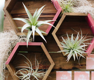 Geometric air plant holder