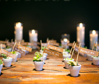 Mini plant escort cards
