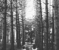 Forest family photos