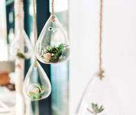 Hanging terrariums