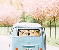 vw van in wedding