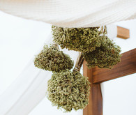 hanging dried oregano bunches