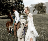 Italian mountain elopement in the Dolomites with alpacas!
