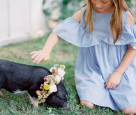 petting zoo for baby shower