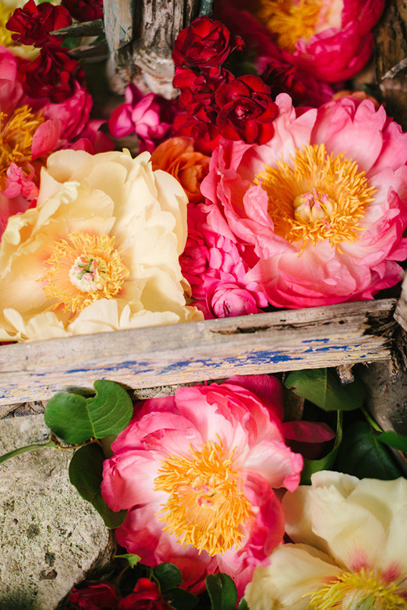peonies forever
