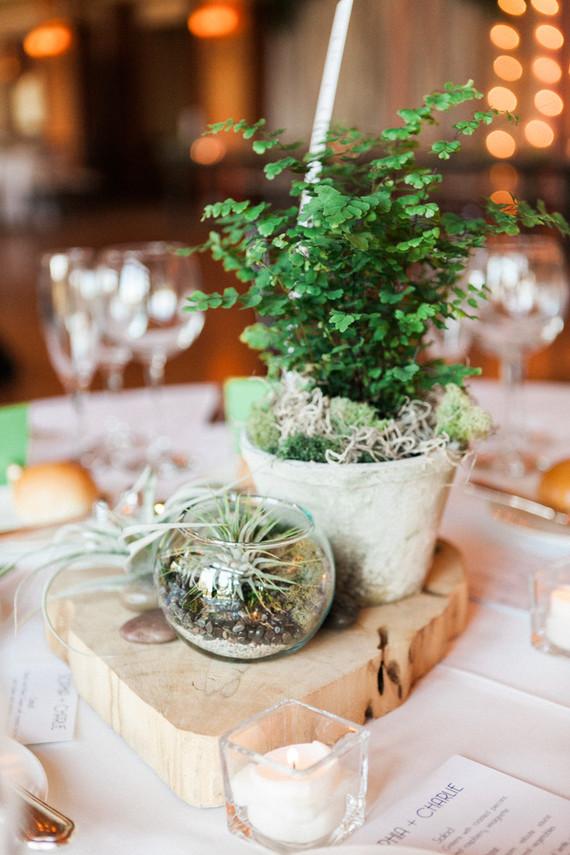 Plant centerpieces