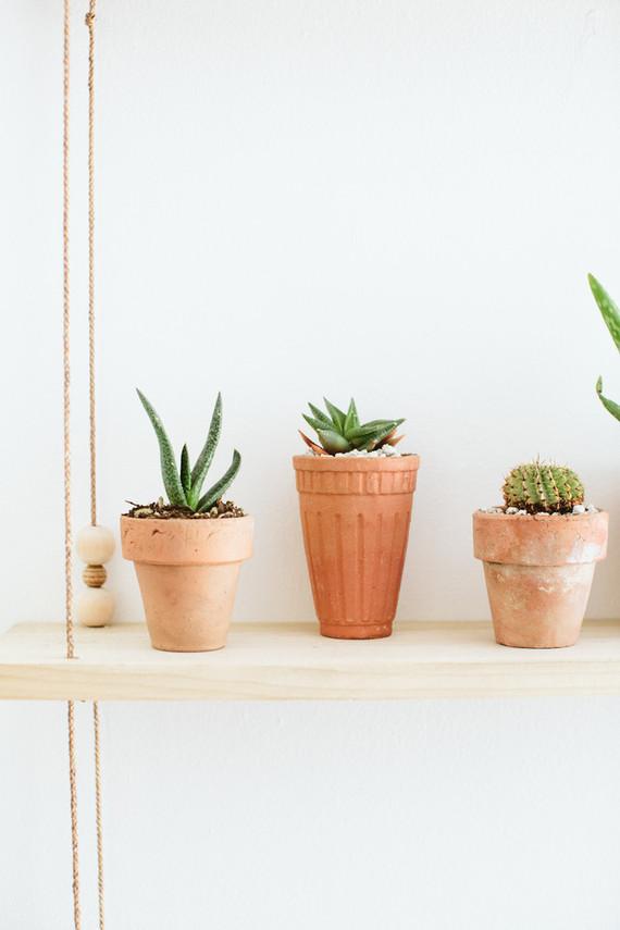 tiny cacti