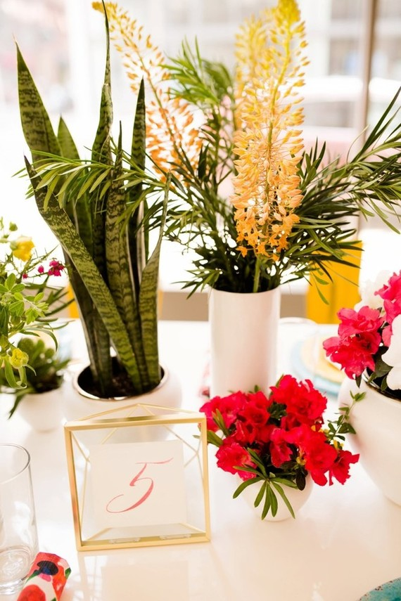 Modern potted plants