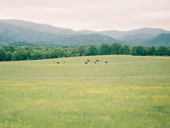 Meadow maternity photos