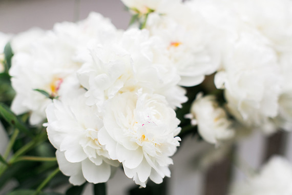 white garden peonies