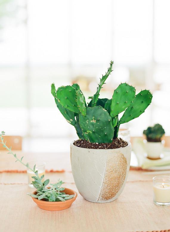 Cactus baby shower