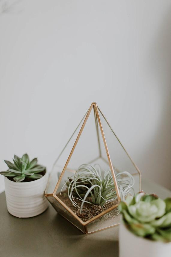 cactus inspired nursery