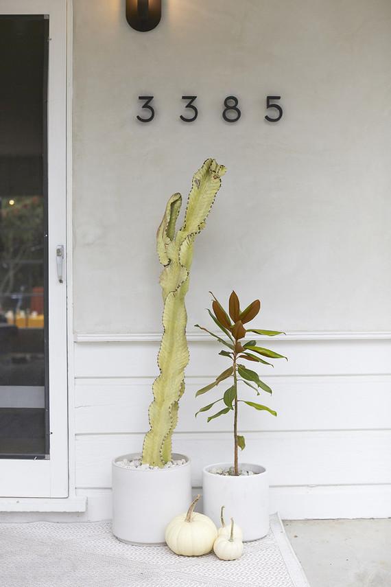 Cactus entryway