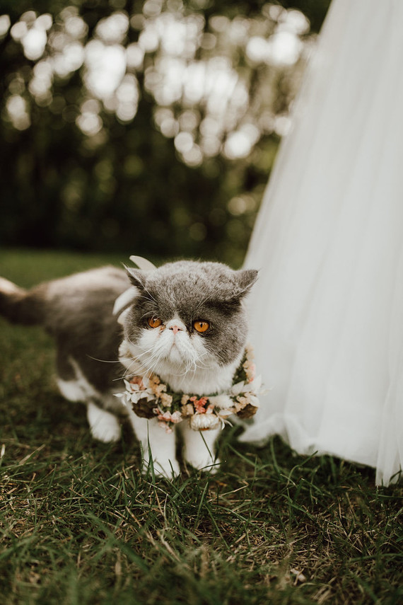 Cat ring barer