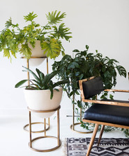house plants and gold stands