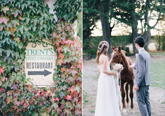 New Zealand Vineyard Wedding